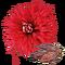 PlantedChrysanthemum1