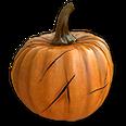 PlantedPumpkin3Harvest