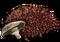 MushroomSpores
