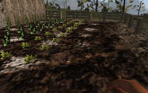 Farming-seedlings