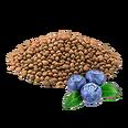 PlantedBlueberry1