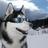 Rodri cyberdog's avatar