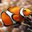 Goldfield1234's avatar