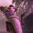 Аватар Огнехвостка(Грозовое племя)