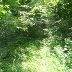 Overgrown trail-150x150