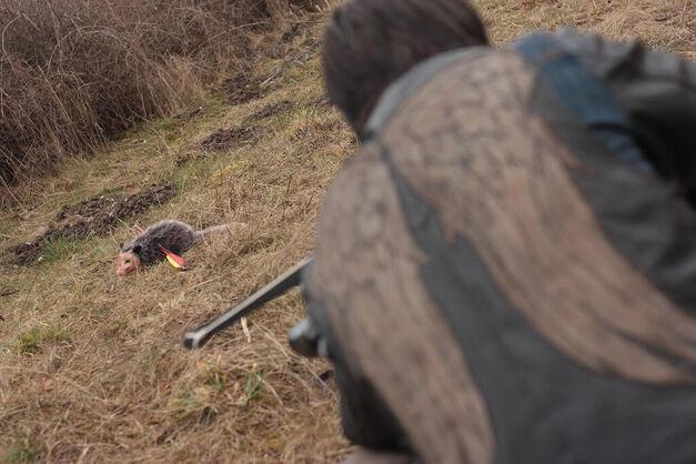 Daryl Hunts Possum