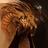 Eleinordash's avatar