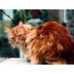 Pelage Rouge's avatar