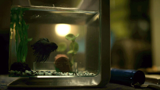 mr-robot-qwerty-fish