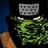 Zuasaki's avatar