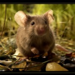 Стальная Мышка