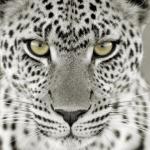 Baghira2's avatar