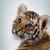 Tigerfriend1999