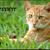 Firepelt the medicine cat