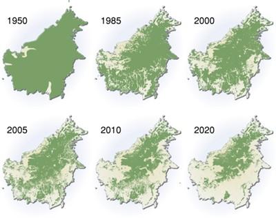 Borneodeforstatioaaa
