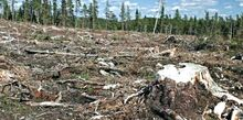 DEFORESTATION AND WHY IT OCCURS BY DYLAN YAHAMPATH