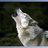 Wolf6537's avatar