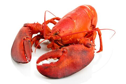 File:Live lobster.jpg