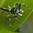 LysurusPeriphragmoides789's avatar