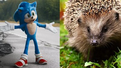 What Does Sonic The Hedgehog Get Right About Actual Hedgehogs?