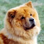 WicekWacek's avatar