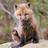 Foxyfox7's avatar