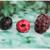 3 Derpy Berries