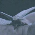 Flux 345's avatar