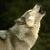Dkwolf27