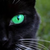 Darkfeather-Med-Cat