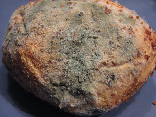 File:Moldy bread.jpg