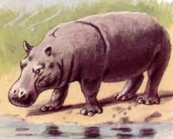 File:Hippo drawing.jpg
