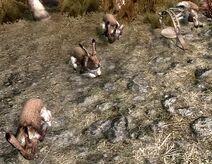 Skyrim Rabbits&Trap2