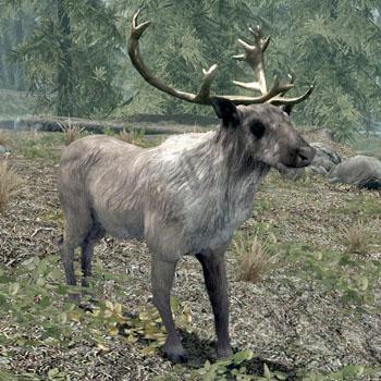 File:Deer(Skyrim).jpg