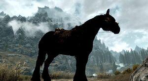 Black Horse Skyrim