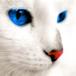 SaveRcats