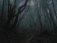 Mistywoods
