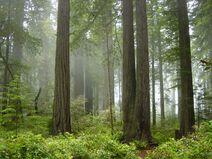 Onomatopoeiarainforest