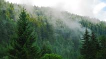 Westernforest