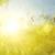Солнцекрылая