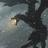 Hokorunevenaarin's avatar