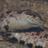 GwenLuru's avatar