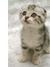 Feline 28