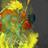 OptimusGoku's avatar
