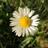 Gänseblumnase's avatar
