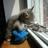 Lolful64's avatar