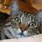 Gregsson88's avatar