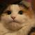 Кот Повелитель Людей