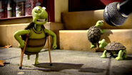 Discomfort tortoises