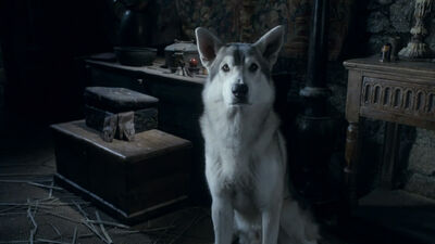 The Stark Direwolves: Where Are They Now?